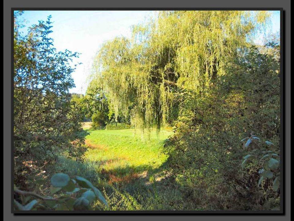 Le parc La présence d'un parc est attestée dès le milieu du XIVes.