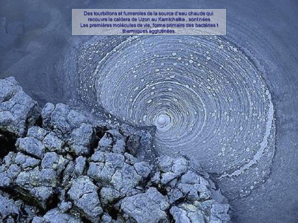 Des tourbillons et fumeroles de la source d'eau chaude qui recouvre la caldera de Uzon au Kamtchatka, sont nées Les premières molécules de vie, forme primaire des bactéries t thermiques agglutinées.