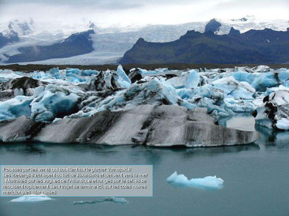 Poussés par les vents qui soufflent sur le glacier Vatnajoküll Les icebergs s'échapent du lac de Jäkalsarlo et dérivent vers la mer.