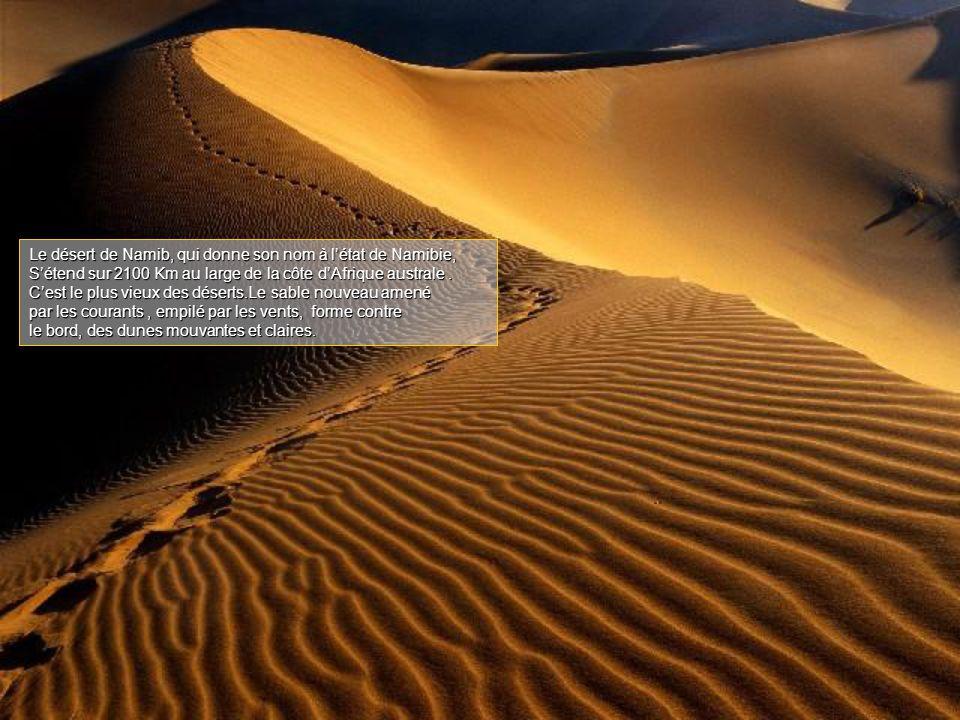 Le désert de Namib, qui donne son nom à l'état de Namibie, S'étend sur 2100 Km au large de la côte d'Afrique australe.