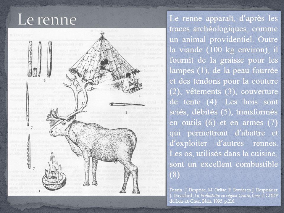 Le renne appara î t, d ' apr è s les traces arch é ologiques, comme un animal providentiel.