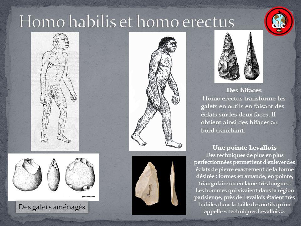Des galets aménagés Des bifaces Homo erectus transforme les galets en outils en faisant des éclats sur les deux faces.