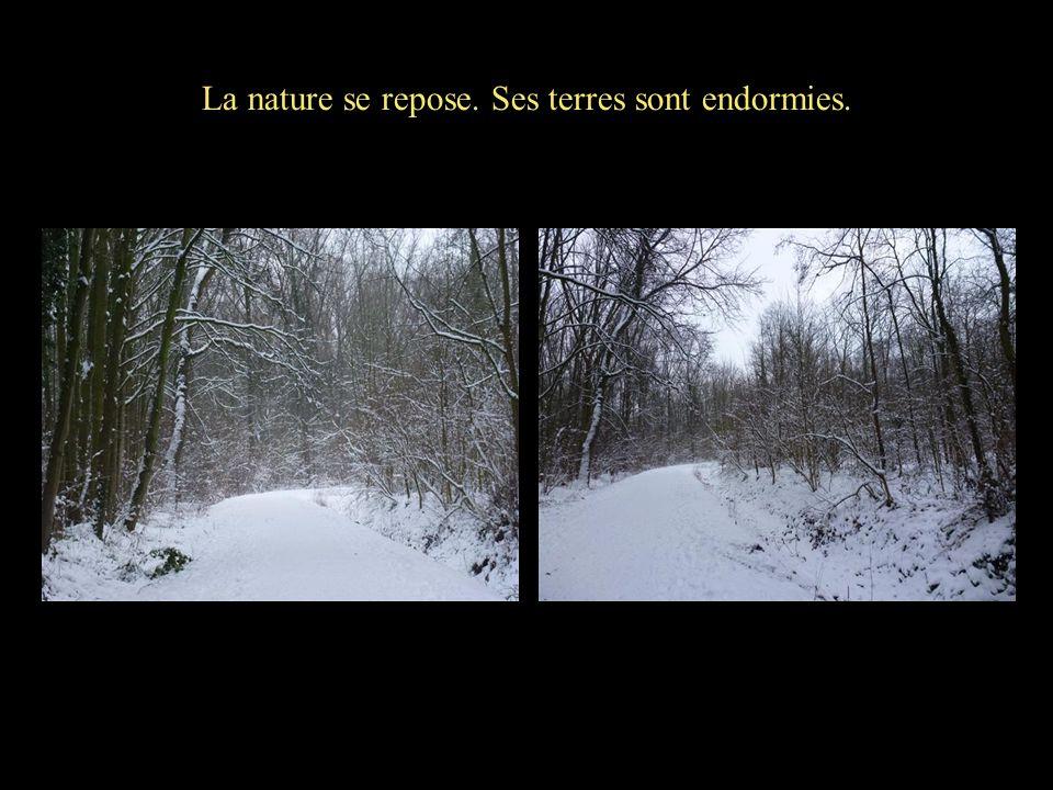 La nature se repose. Ses terres sont endormies.