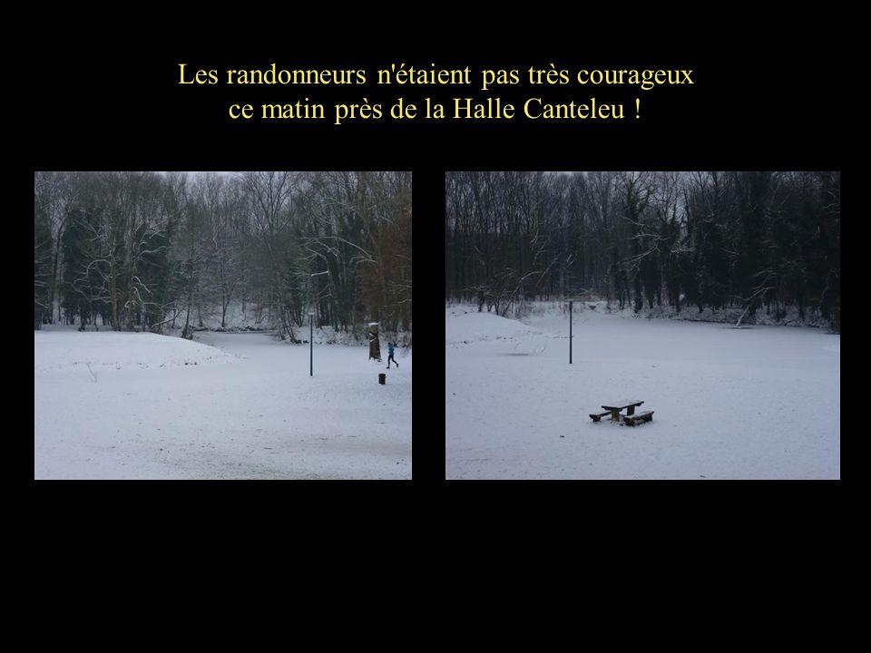 Les randonneurs n'étaient pas très courageux ce matin près de la Halle Canteleu !