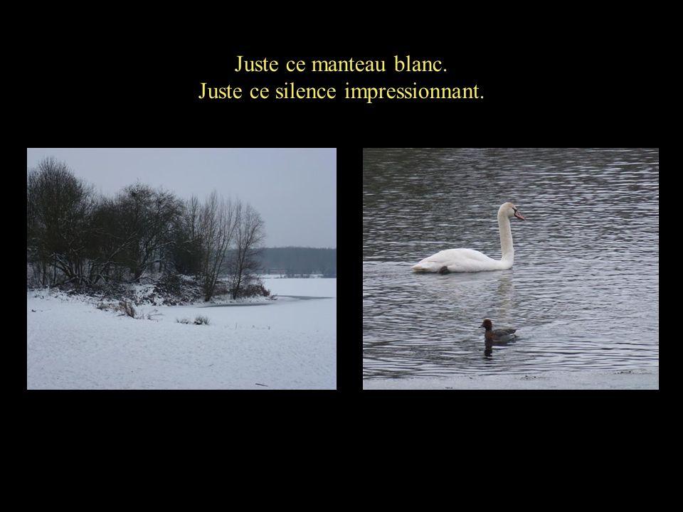 Juste ce manteau blanc. Juste ce silence impressionnant.