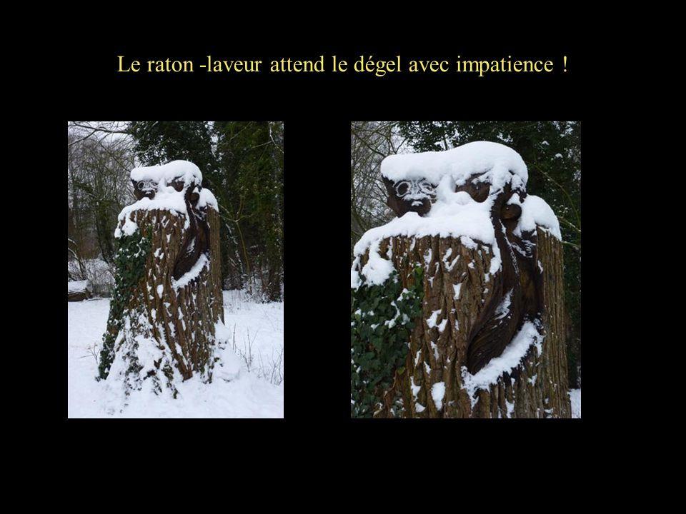 Le raton -laveur attend le dégel avec impatience !