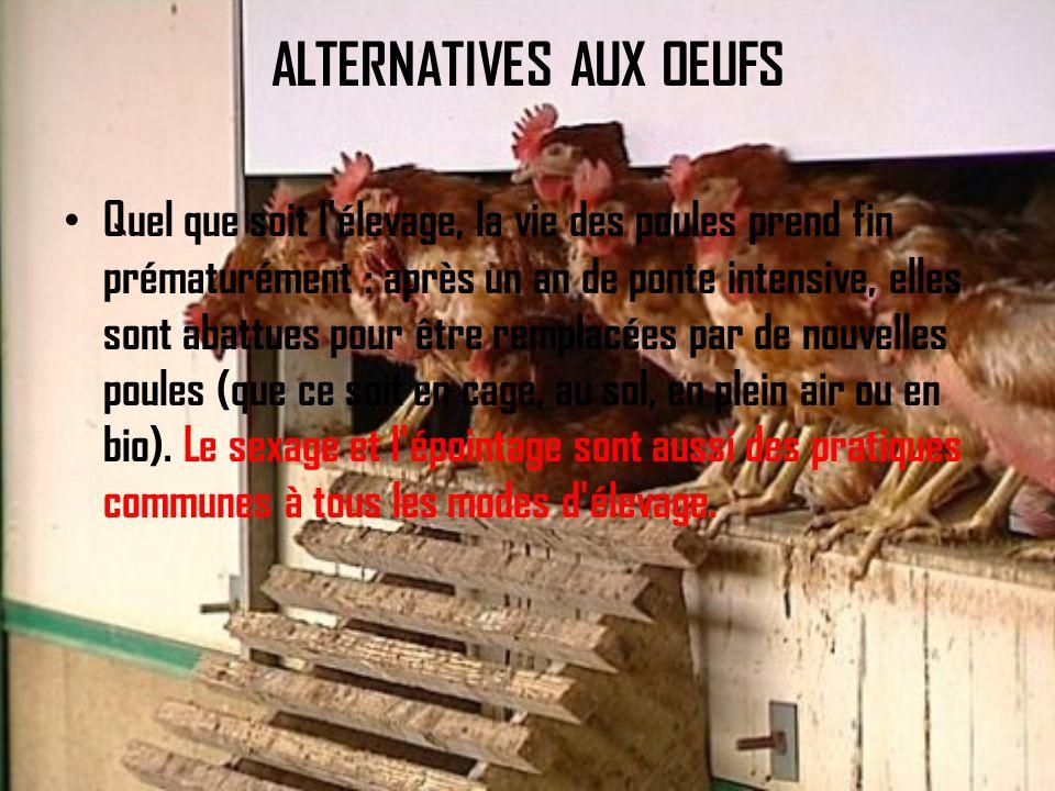 ALTERNATIVES AUX OEUFS Quel que soit l élevage, la vie des poules prend fin prématurément : après un an de ponte intensive, elles sont abattues pour être remplacées par de nouvelles poules (que ce soit en cage, au sol, en plein air ou en bio).