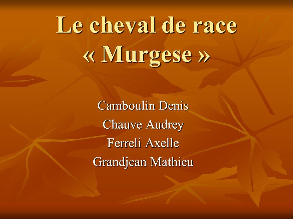 Le cheval de race « Murgese » Camboulin Denis Chauve Audrey Ferreli Axelle Grandjean Mathieu