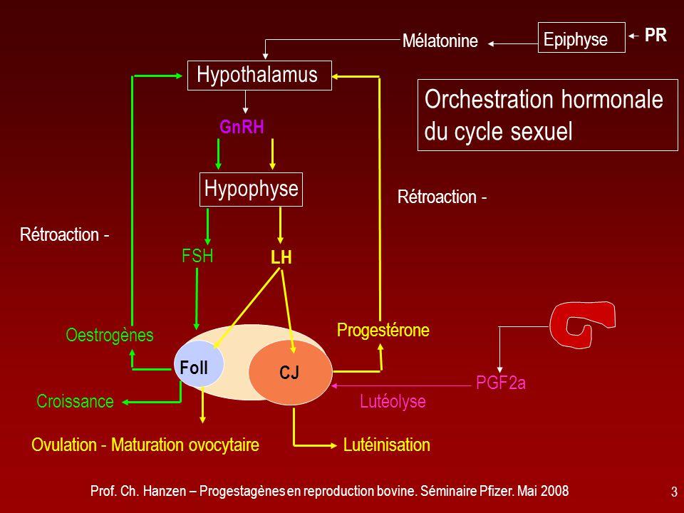 Prof. Ch. Hanzen – Progestagènes en reproduction bovine. Séminaire Pfizer. Mai 2008 3 CJ Foll Hypophyse Hypothalamus Epiphyse Oestrogènes Progestérone