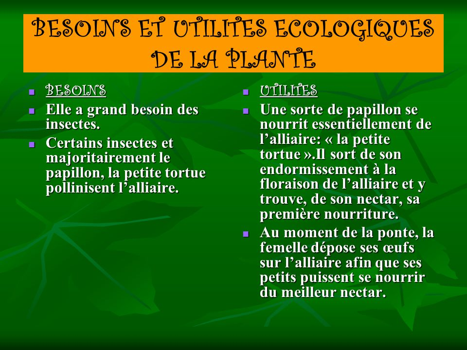 BESOINS ET UTILITES ECOLOGIQUES DE LA PLANTE BESOINS BESOINS Elle a grand besoin des insectes. Elle a grand besoin des insectes. Certains insectes et