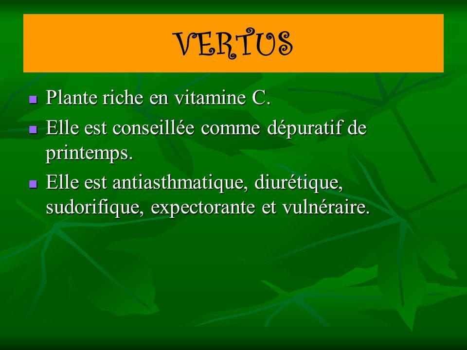 VERTUS Plante riche en vitamine C. Plante riche en vitamine C. Elle est conseillée comme dépuratif de printemps. Elle est conseillée comme dépuratif d
