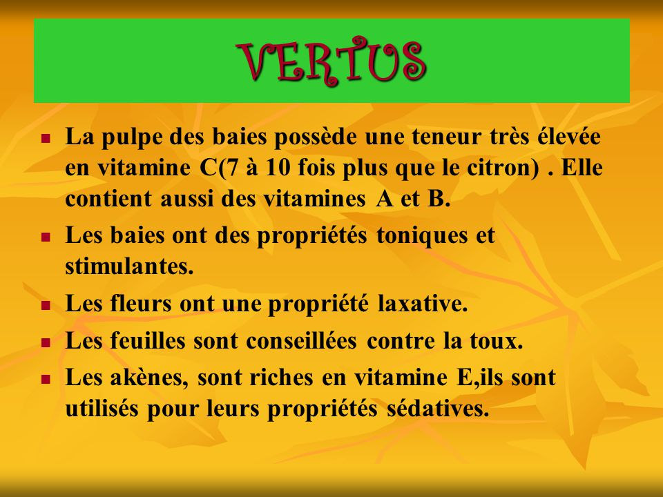 VERTUS La pulpe des baies possède une teneur très élevée en vitamine C(7 à 10 fois plus que le citron). Elle contient aussi des vitamines A et B. Les