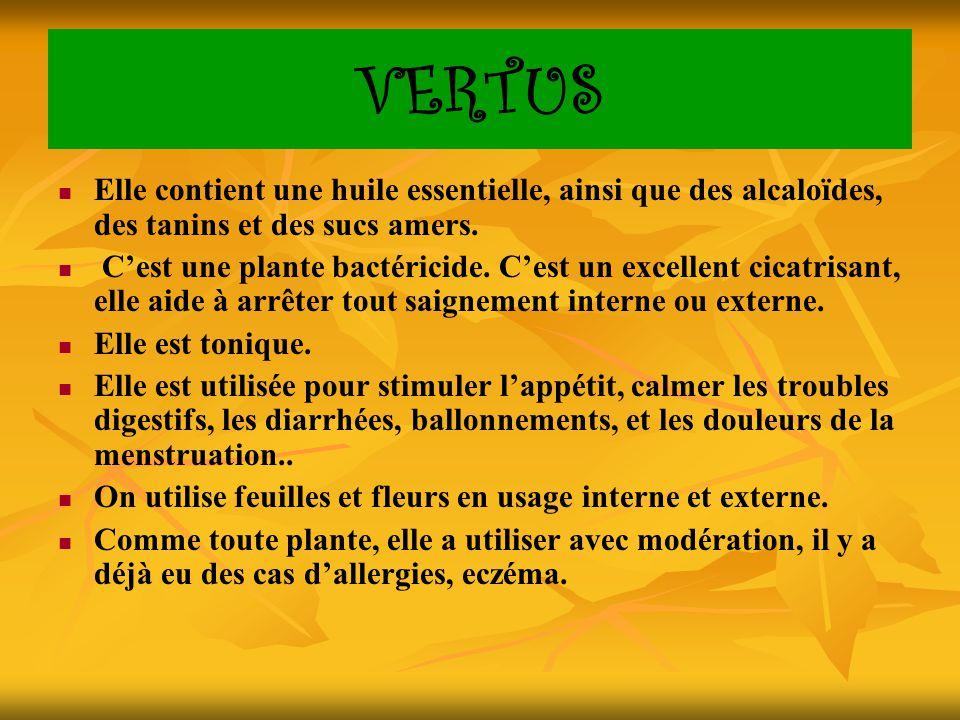 VERTUS Elle contient une huile essentielle, ainsi que des alcaloïdes, des tanins et des sucs amers. C'est une plante bactéricide. C'est un excellent c