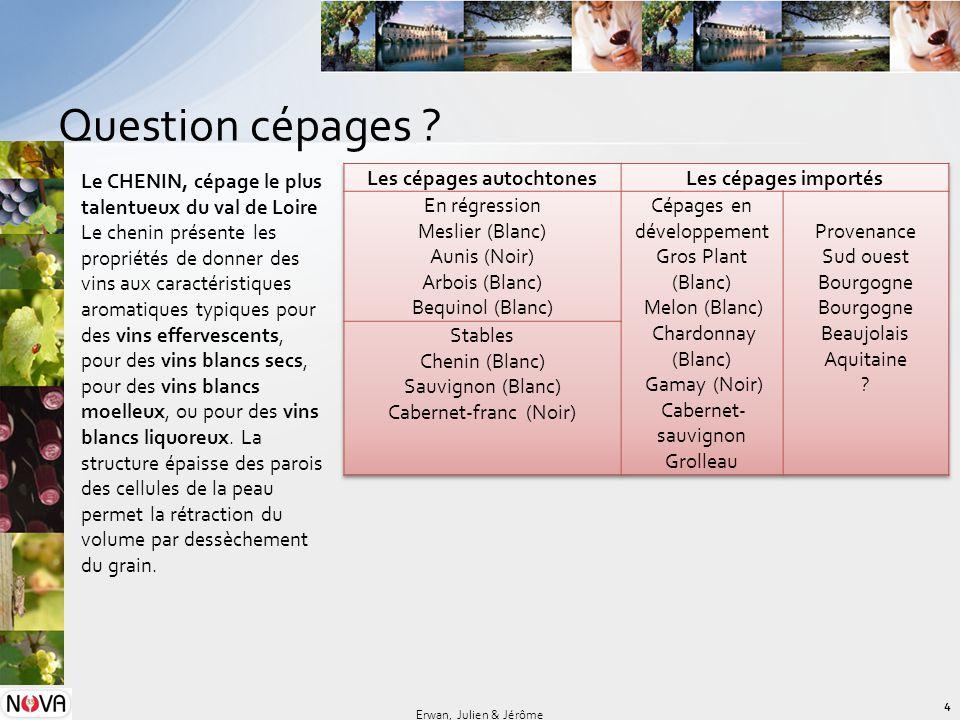 Question cépages ? 4 Erwan, Julien & Jérôme Le CHENIN, cépage le plus talentueux du val de Loire Le chenin présente les propriétés de donner des vins