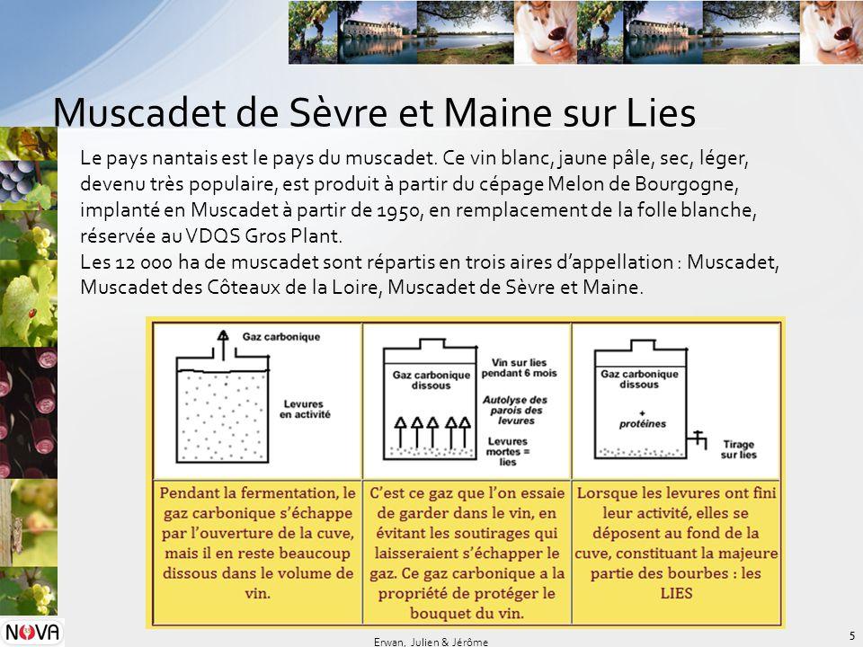Muscadet de Sèvre et Maine sur Lies 5 Erwan, Julien & Jérôme Le pays nantais est le pays du muscadet. Ce vin blanc, jaune pâle, sec, léger, devenu trè