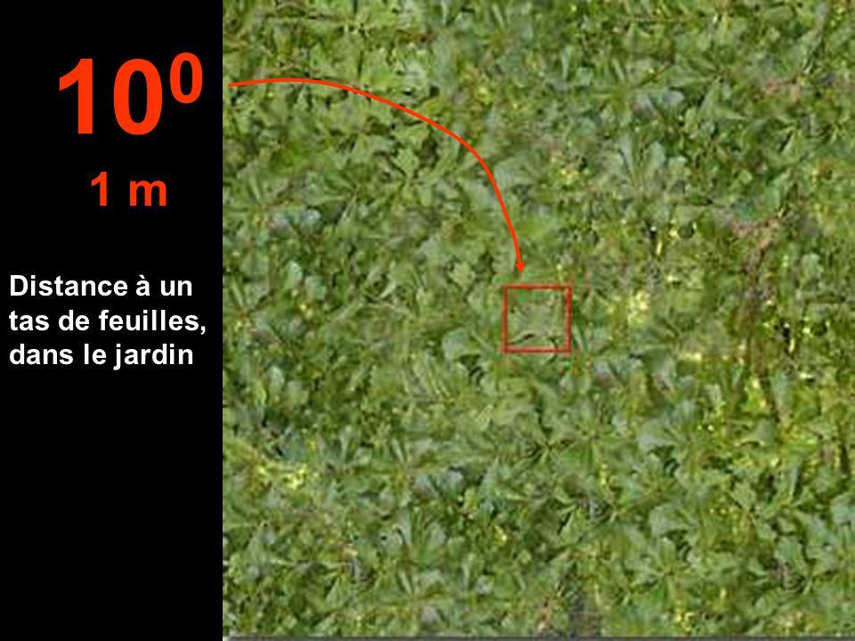 Distance à un tas de feuilles, dans le jardin 10 0 1 m