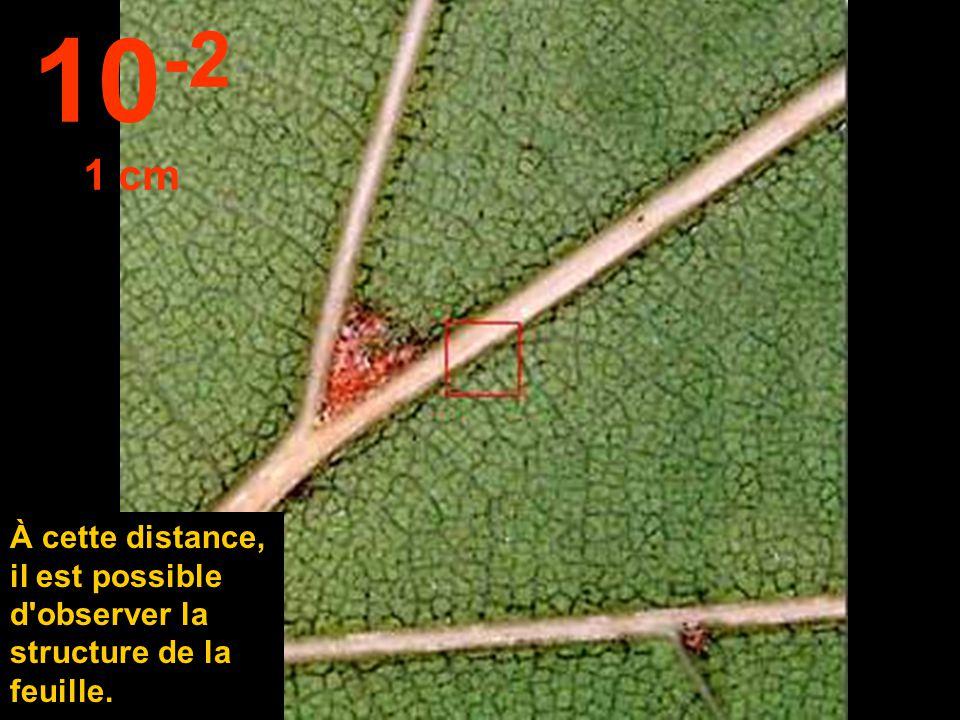 Rapprochons- nous à 10 cm... Nous pouvons distinguer les feuilles. 10 -1 10 cm