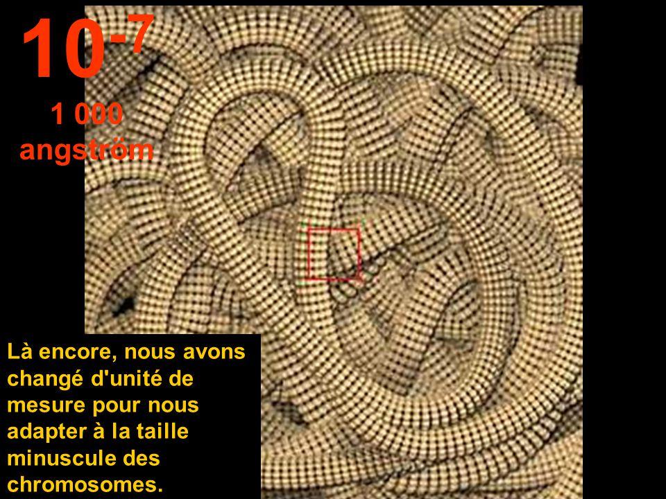 Le noyau de la cellule est visible. 10 -6 1 micron