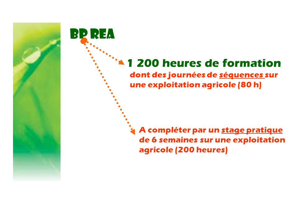 BP REA 1 200 heures de formation A compléter par un stage pratique de 6 semaines sur une exploitation agricole (200 heures) dont des journées de séquences sur une exploitation agricole (80 h)