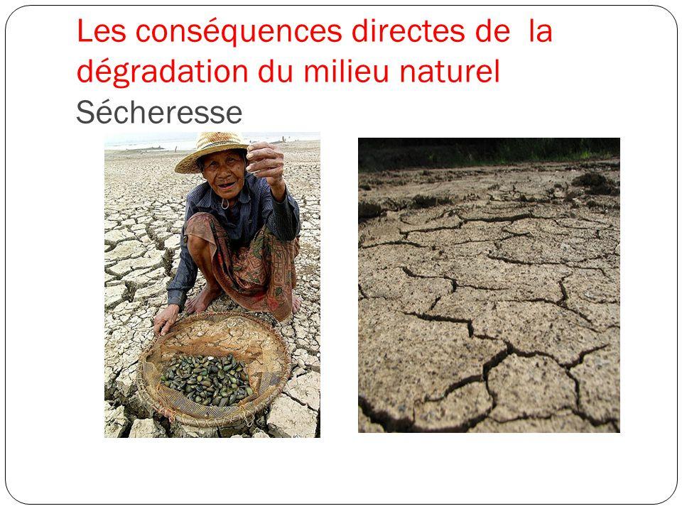 Les conséquences directes de la dégradation du milieu naturel Sécheresse