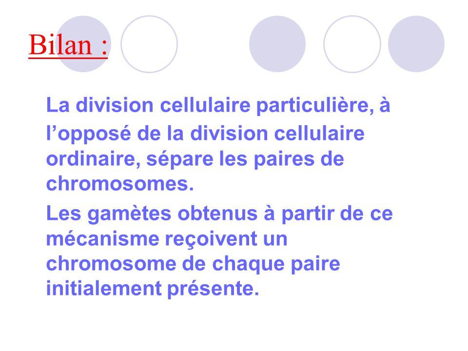 Activité n°1 : une division cellulaire particulière Cellule ordinaire (ici testicule) 23 paires = 46 chromosomes.