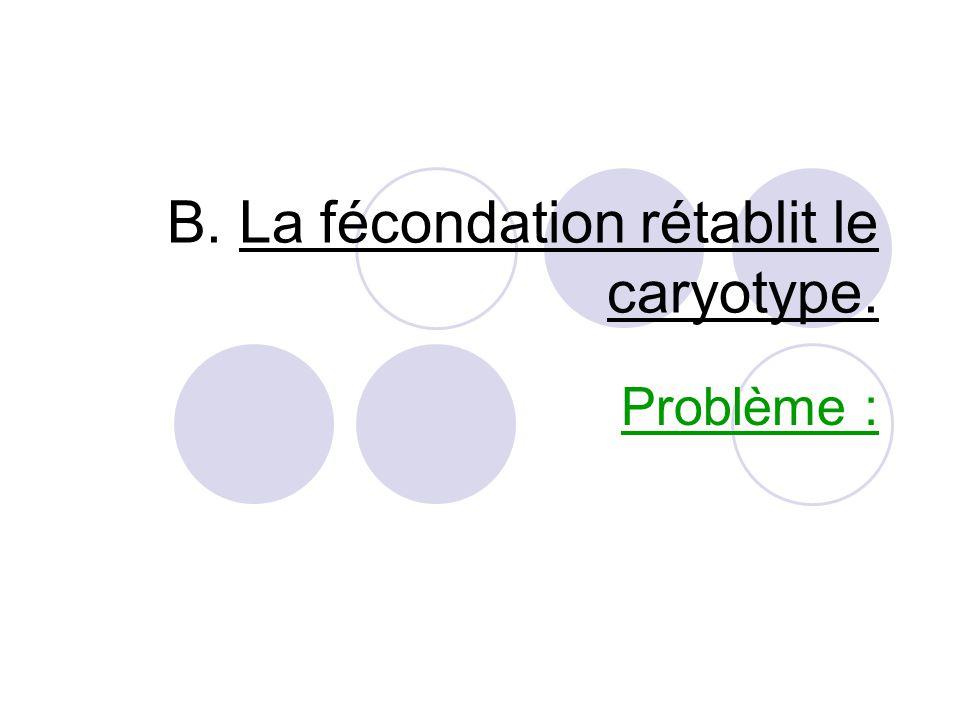 Bilan : La division cellulaire particulière, à l'opposé de la division cellulaire ordinaire, sépare les paires de chromosomes.