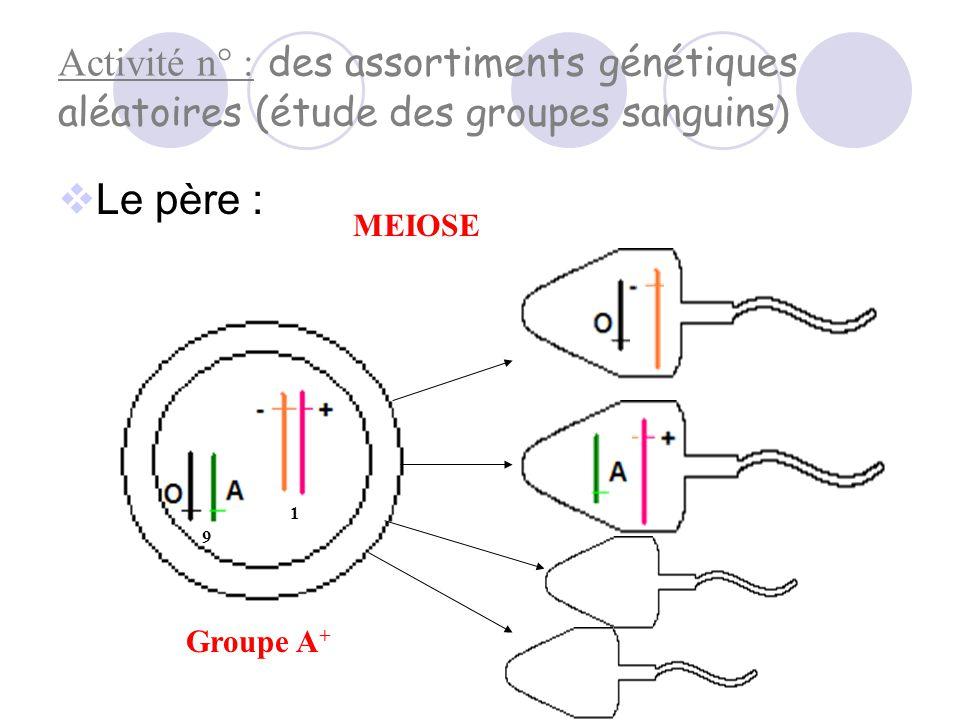Bilan :  Lors de la fécondation, spermatozoïdes et ovules participent à la transmission de l'information génétique.