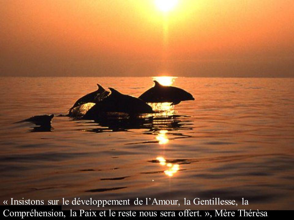 « Insistons sur le développement de l'Amour, la Gentillesse, la Compréhension, la Paix et le reste nous sera offert. », Mère Thérèsa