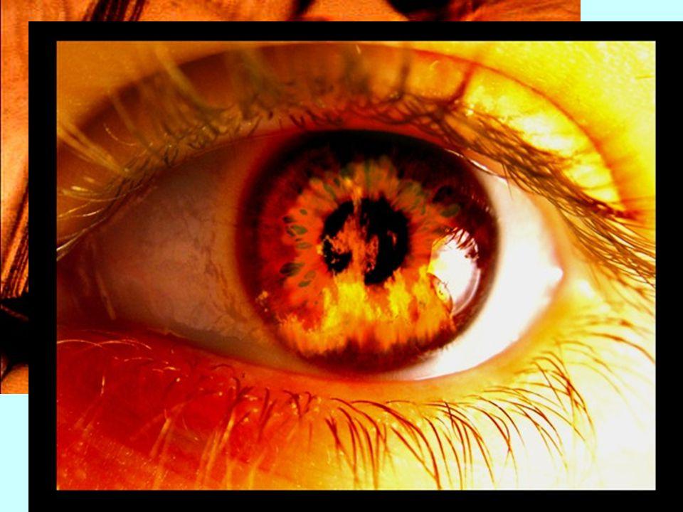 …/… Conclusion ! Un livre est un fusil chargé dans la maison d'à côté. Brûlons-le. Déchargeons l'arme ! Ray Bradbury Fahrenheit 451