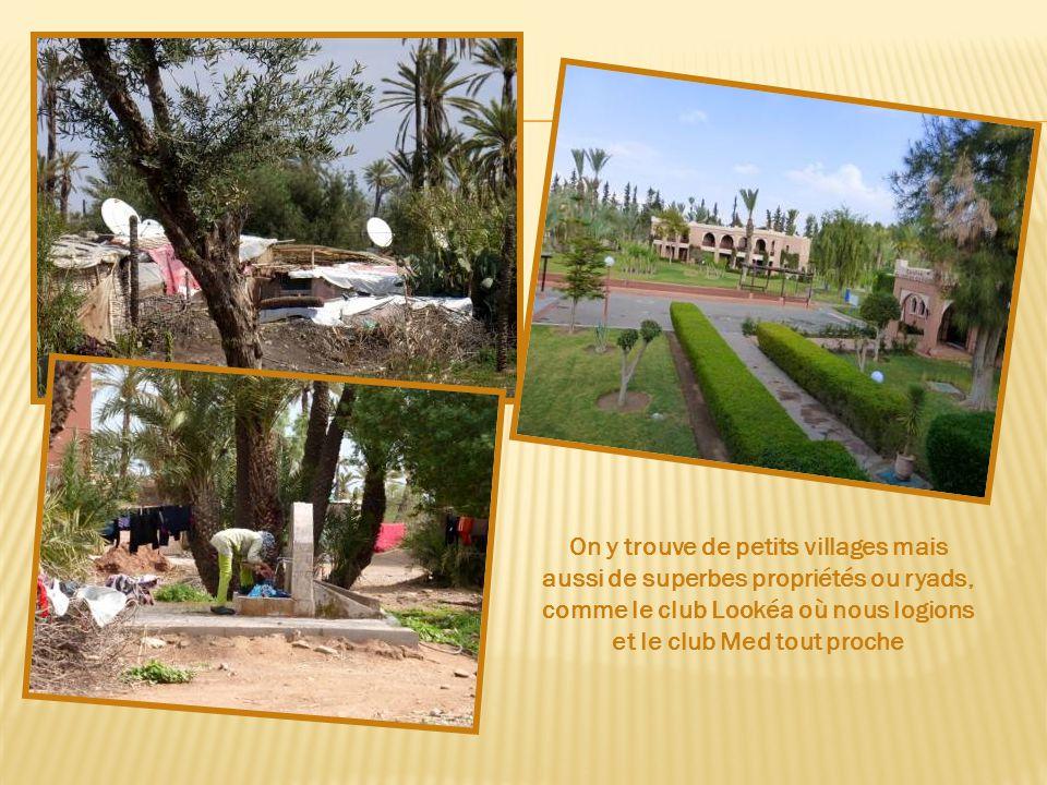 Elle couvre 14000 ha. Les palmiers souffrent d'un manque d'irrigation dû à des canaux mal entretenus.