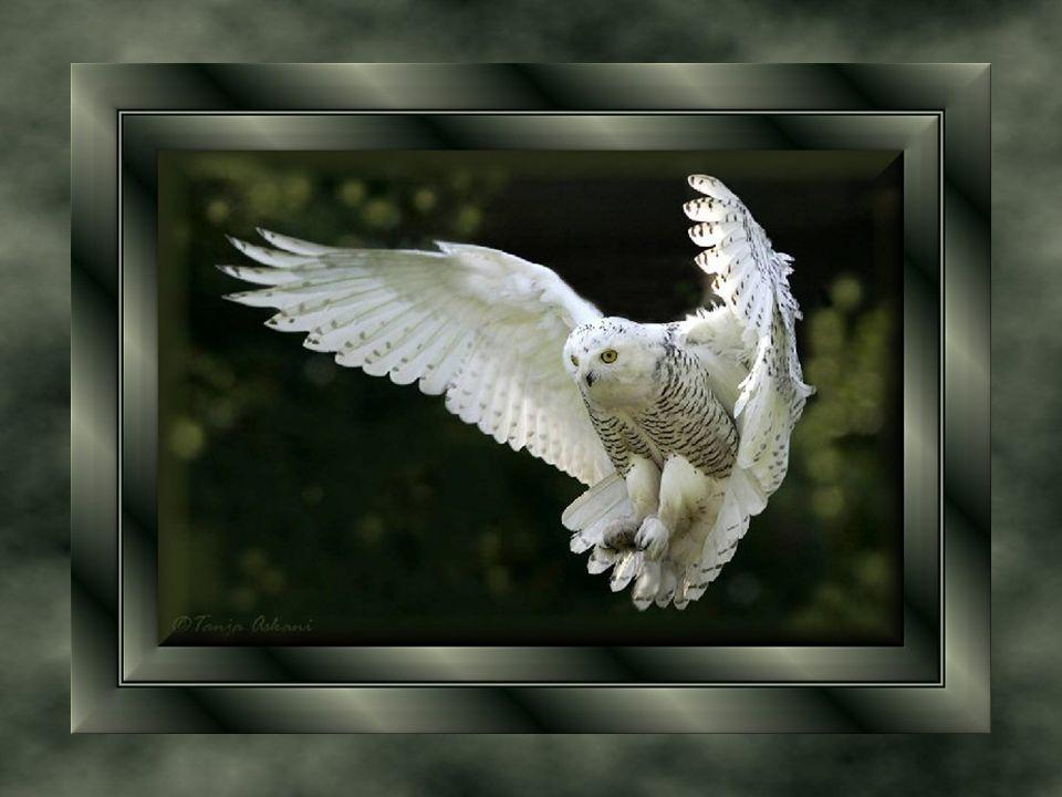Si vous doutez, regardez la vie dans la nature, Les oiseaux savent bien qu en haut, l air est plus pur.