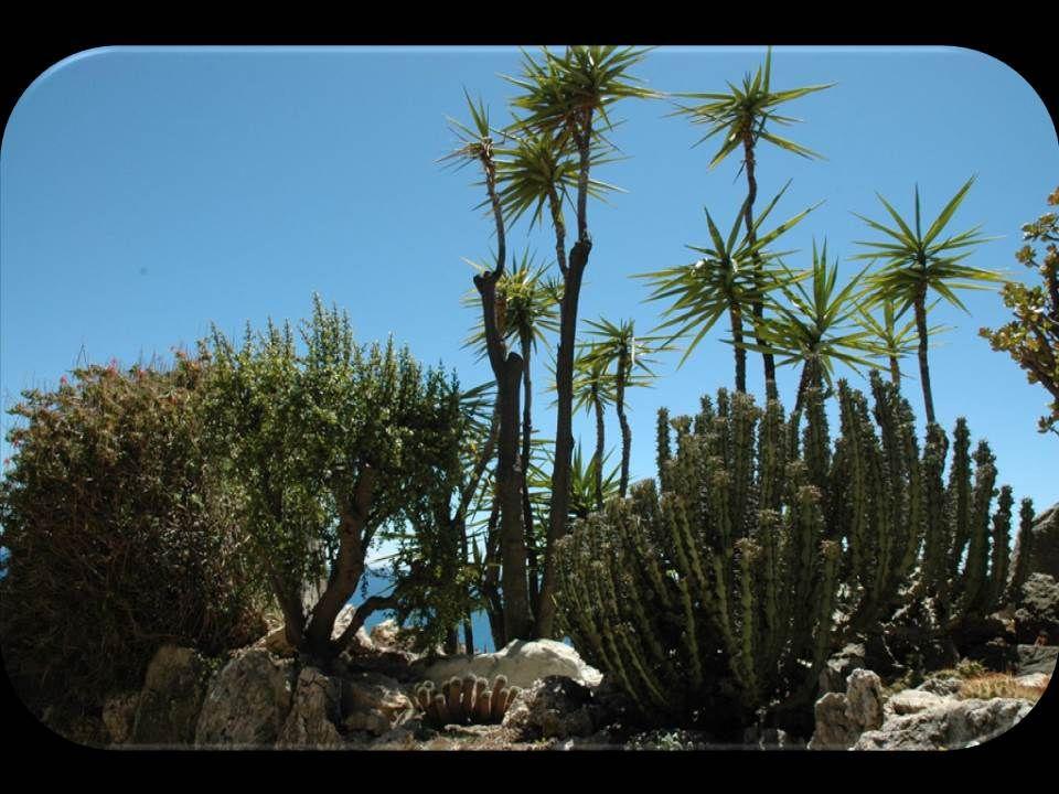 Le jardin exotique de Monaco est un jardin botanique; nous le verrons sur les prochaines diapositives. Conçu par l'ingénieur monégasque Louis Notari s