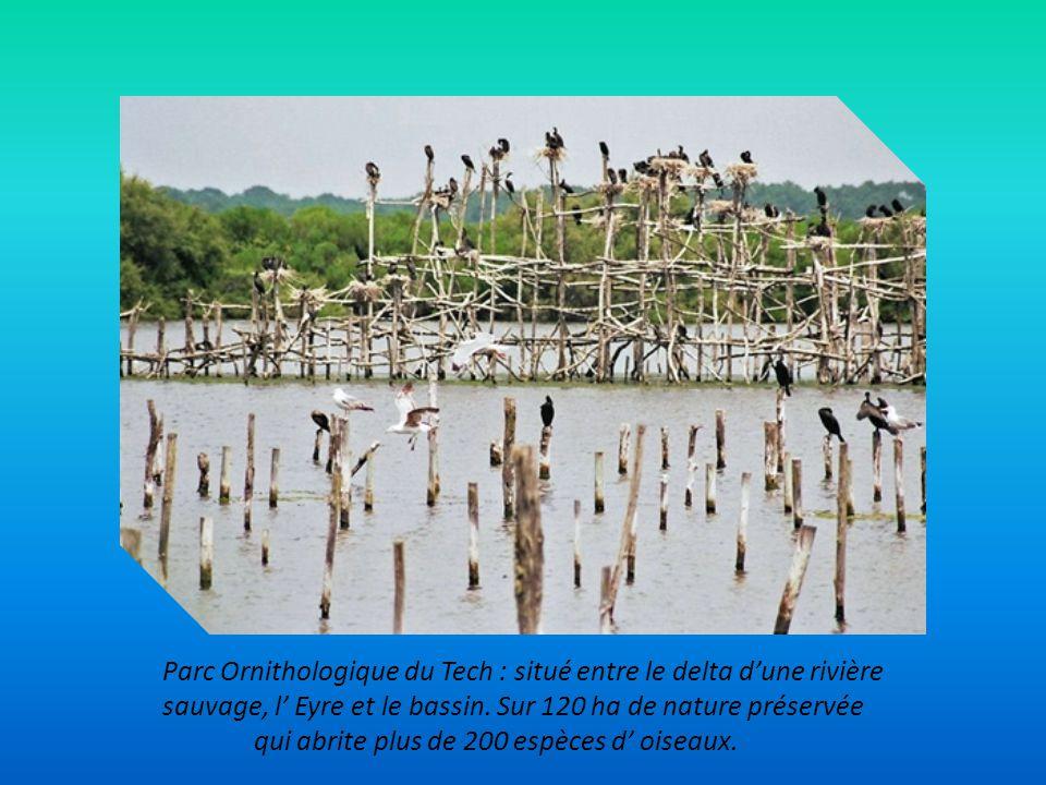 Gujan – Mestras : capitale de l' huitre avec 7 ports dédiés. Cabanes, chenaux remplis de pinasses et parcs à huitres.