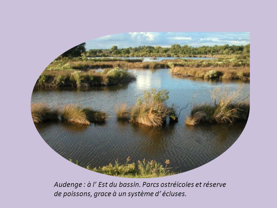 Parc Ornithologique du Tech : situé entre le delta d'une rivière sauvage, l' Eyre et le bassin.