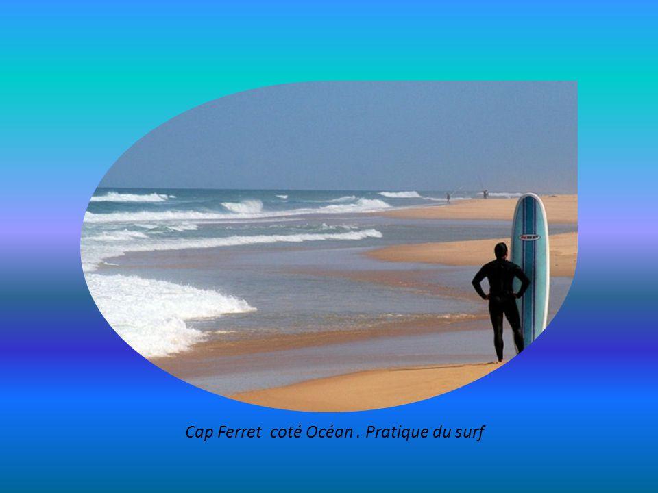 Presqu'ile de Lège-Cap-Ferret : langue de sable entre bassin et Océan sur 25kms, villages et pinèdes ( ici : La Pointe aux Chevaux)