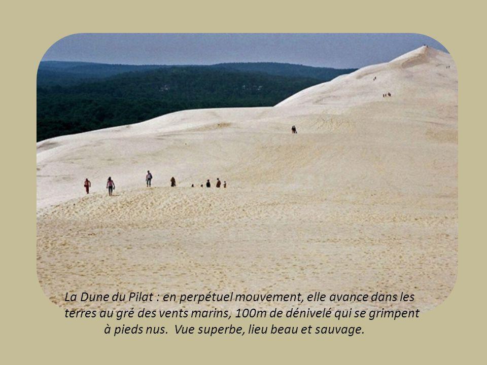 La Dune du Pilat : en perpétuel mouvement, elle avance dans les terres au gré des vents marins, 100m de dénivelé qui se grimpent à pieds nus.