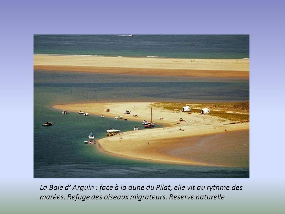La Dune du Pilat : en perpétuel mouvement, elle avance dans les terres au gré des vents marins, 100m de dénivelé qui se grimpent à pieds nus. Vue supe