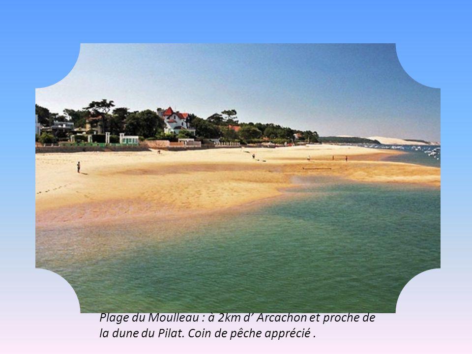 Plage du Moulleau : à 2km d' Arcachon et proche de la dune du Pilat. Coin de pêche apprécié.