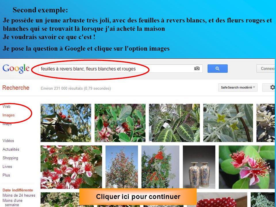 Second exemple: Je possède un jeune arbuste très joli, avec des feuilles à revers blancs, et des fleurs rouges et blanches qui se trouvait là lorsque j ai acheté la maison Je voudrais savoir ce que c est .