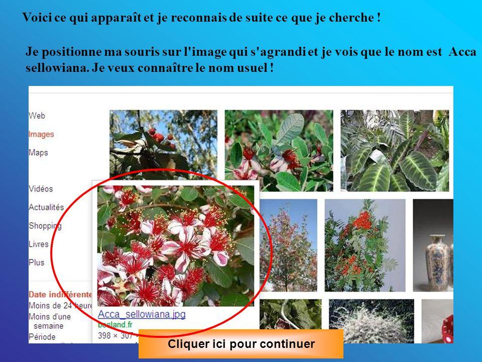 Second exemple: Je possède un jeune arbuste très joli, avec des feuilles à revers blancs, et des fleurs rouges et blanches qui se trouvait là lorsque