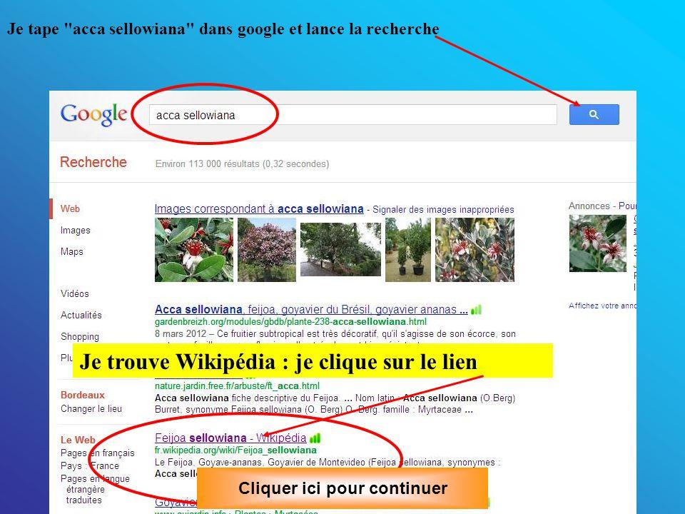 Je tape acca sellowiana dans google et lance la recherche Je trouve Wikipédia : je clique sur le lien Cliquer ici pour continuer