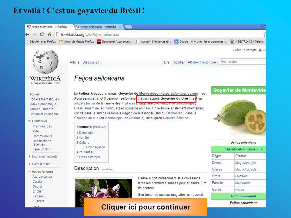 Et voilà ! C est un goyavier du Brésil ! Cliquer ici pour continuer