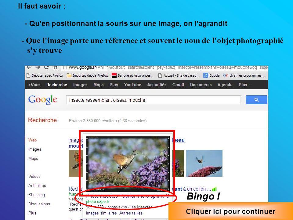 - Que l image porte une référence et souvent le nom de l objet photographié s y trouve Bingo .