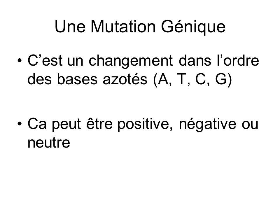 Une Mutation Génique C'est un changement dans l'ordre des bases azotés (A, T, C, G) Ca peut être positive, négative ou neutre