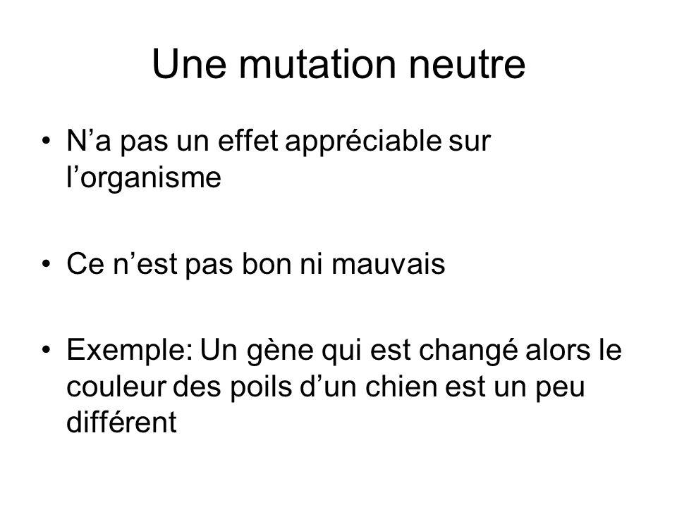 Une mutation neutre N'a pas un effet appréciable sur l'organisme Ce n'est pas bon ni mauvais Exemple: Un gène qui est changé alors le couleur des poil