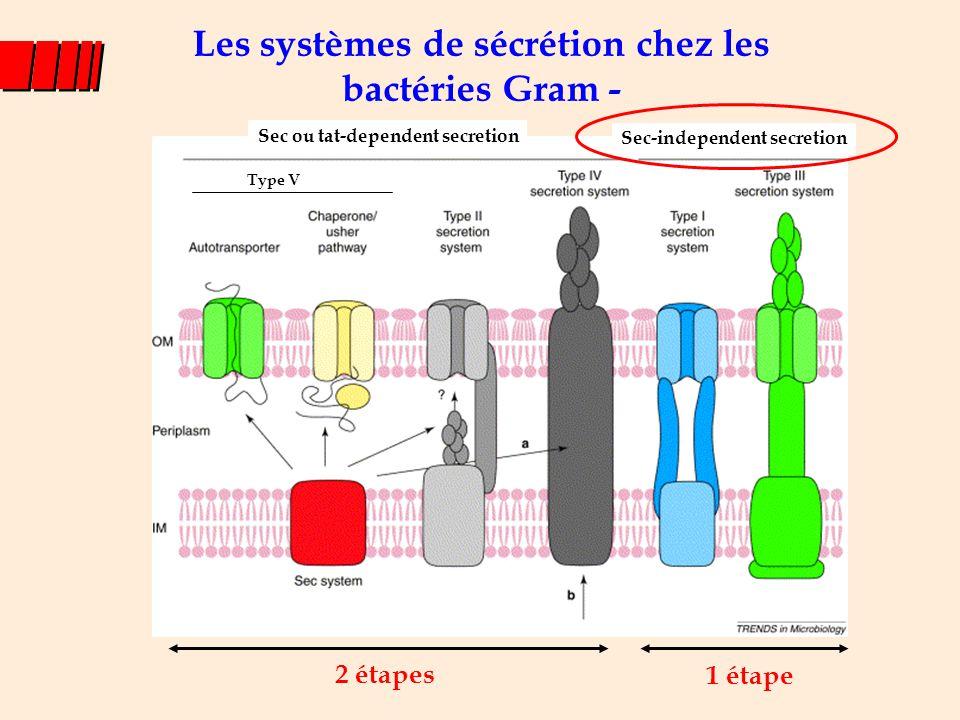 Les systèmes de sécrétion chez les bactéries Gram - 2 étapes 1 étape Sec ou tat-dependent secretion Sec-independent secretion Type V