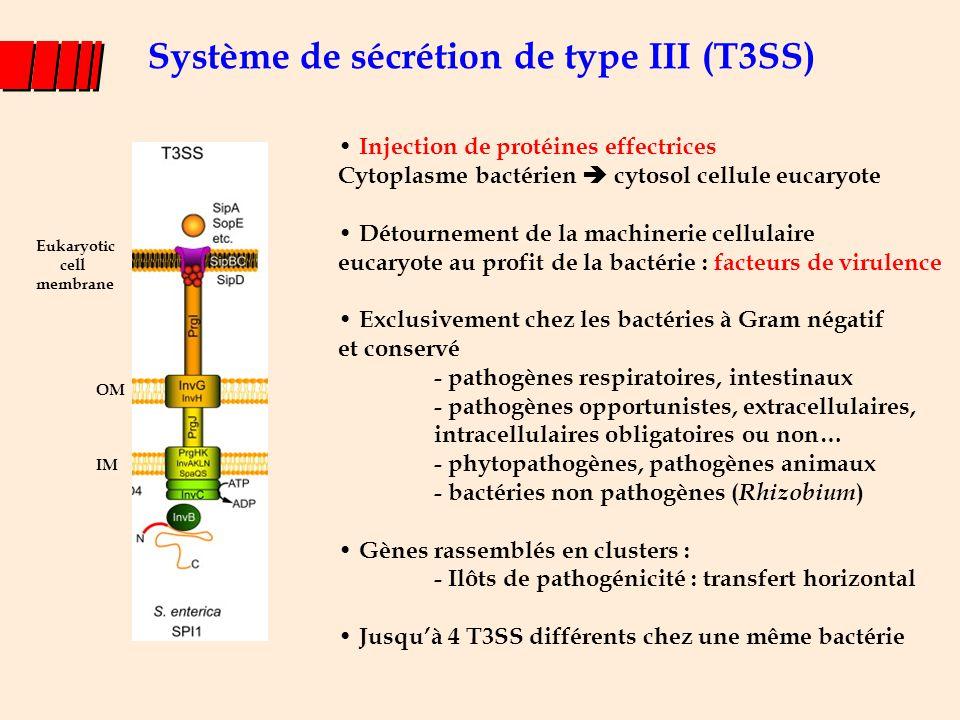Support génétique : les ilôts de pathogénicité l Grande région d'ADN (10 à 200 kb) présente chez un pathogène mais absente chez des bactéries non-pathogènes proches dans l'évolution : chromosome ou plasmide l %G+C souvent distinct de celui du reste du génôme l Loci génétiques codant les T3SS très similaires à l'intérieur d'une espèce et également chez des espèces ou des genres bactériens éloignés Venkatesan MM et al, Infect Immun, 69:3271, 2001