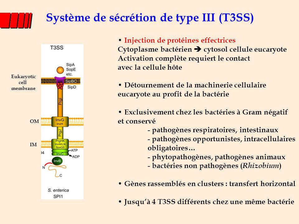 T3SS : systèmes complexes l 20 à 40 protéines impliquées – Protéines de structure du T3SS : needle complex – Protéines permettant la translocation – Chaperonnes – Protéines effectrices – Régulateurs l Doivent délivrer les protéines dans la cellule eucaryote au bon endroit et au bon moment IM OM Eukaryotic cell membrane Translocon Needle complex Prot effect.