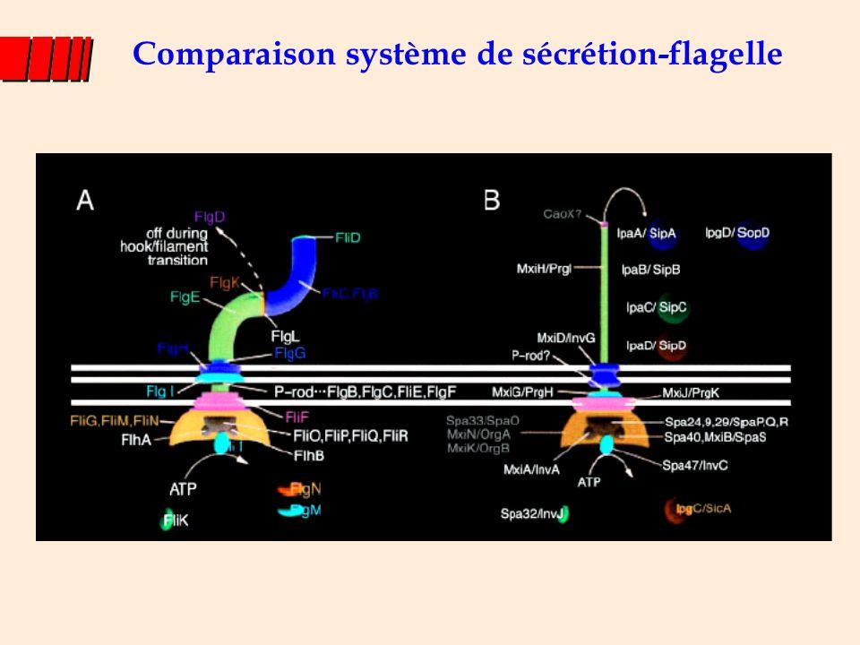 T3SS-1 T3SS-2 Hansen-Wester & Hensel, 2001 Chez Salmonella