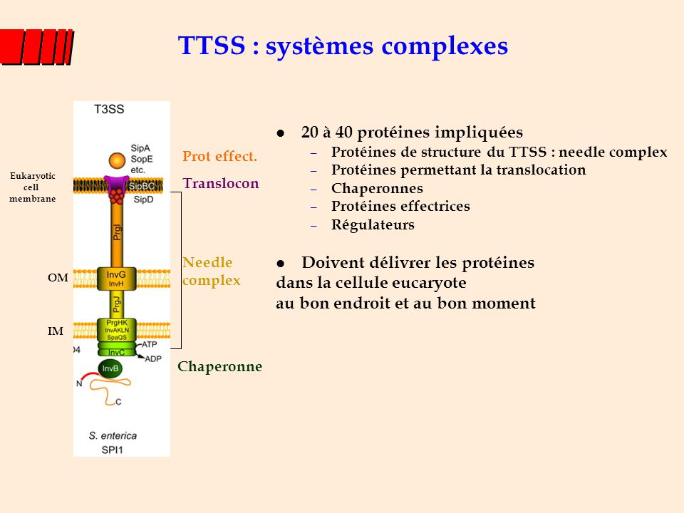 Structure du « Needle Complex » du TTSS-1 Copyright ©2000 by the National Academy of Sciences Kimbrough, Tyler G.